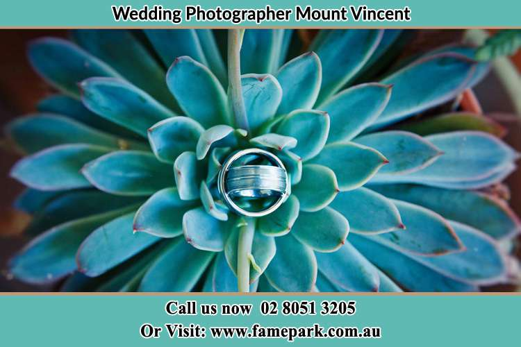 Photo of the wedding ring design at the top of a plant Mount Vincent NSW 2323